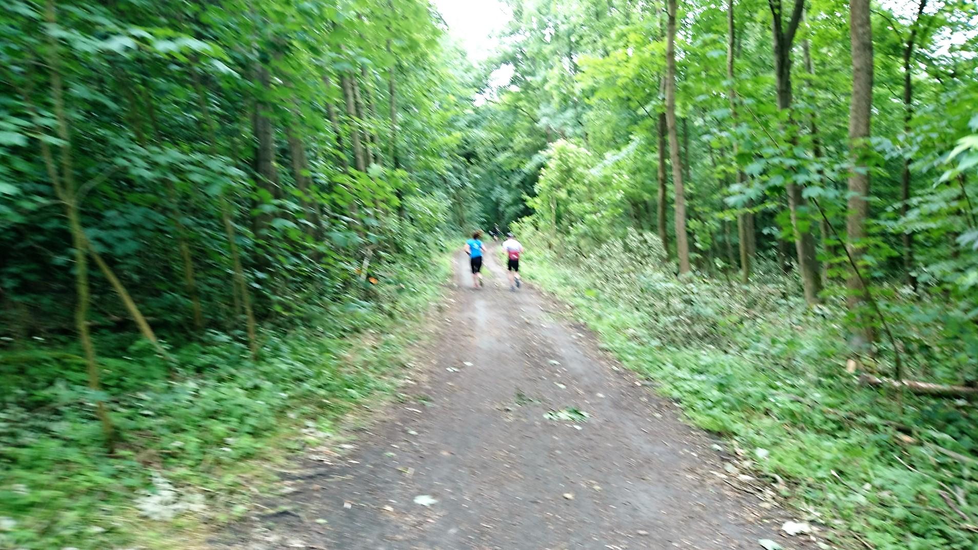 Ćwierćmaraton bociana 2016 las